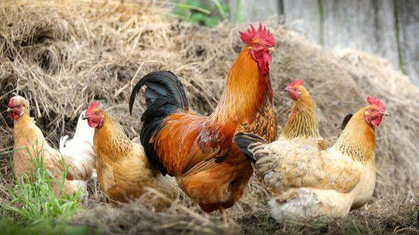 Veterinárne opatrenia na kontrolu chorôb zvierat